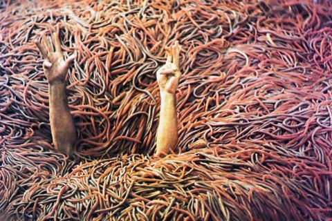 Killer Animal Movies-Squirm
