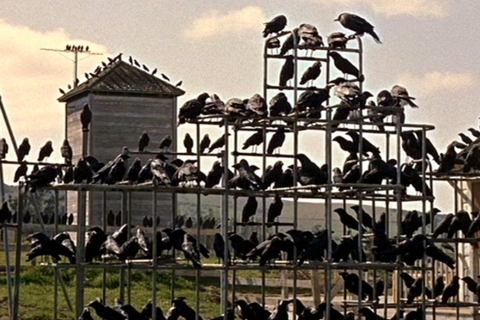 Populist: image: The Birds (1963)