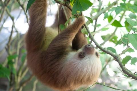 Image: Sloth