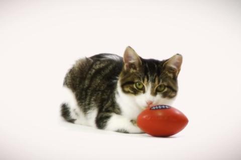 Kitten Bowl I - grab