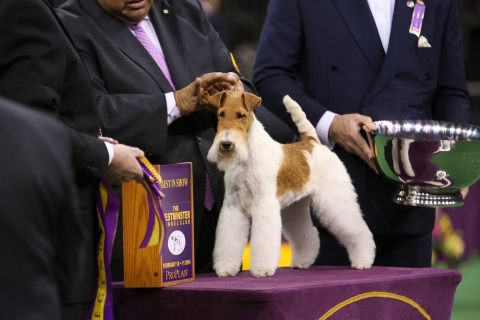 The Westminster Kennel Club Dog Show - 2014
